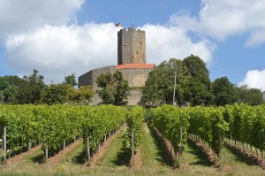 Blick über die Weinbberge
